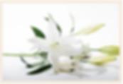 Screen Shot 2020-03-02 at 12.00.19 AM.pn