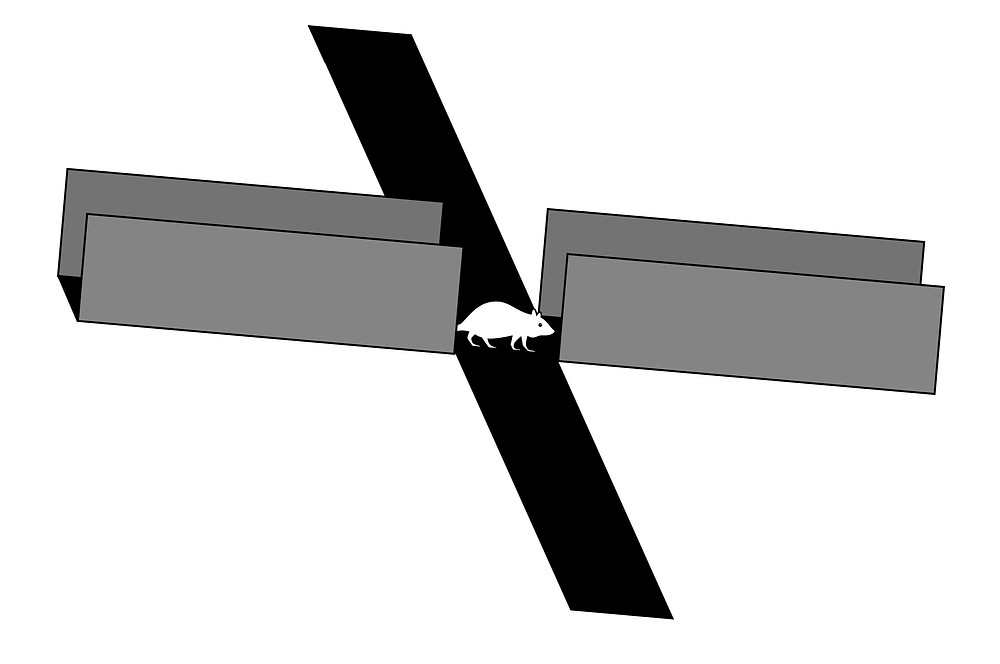 An elevated plus maze: two arms have walls, the other two don't. A rat is in the middle.