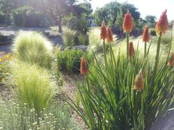 2014 Blooms at Koinonia