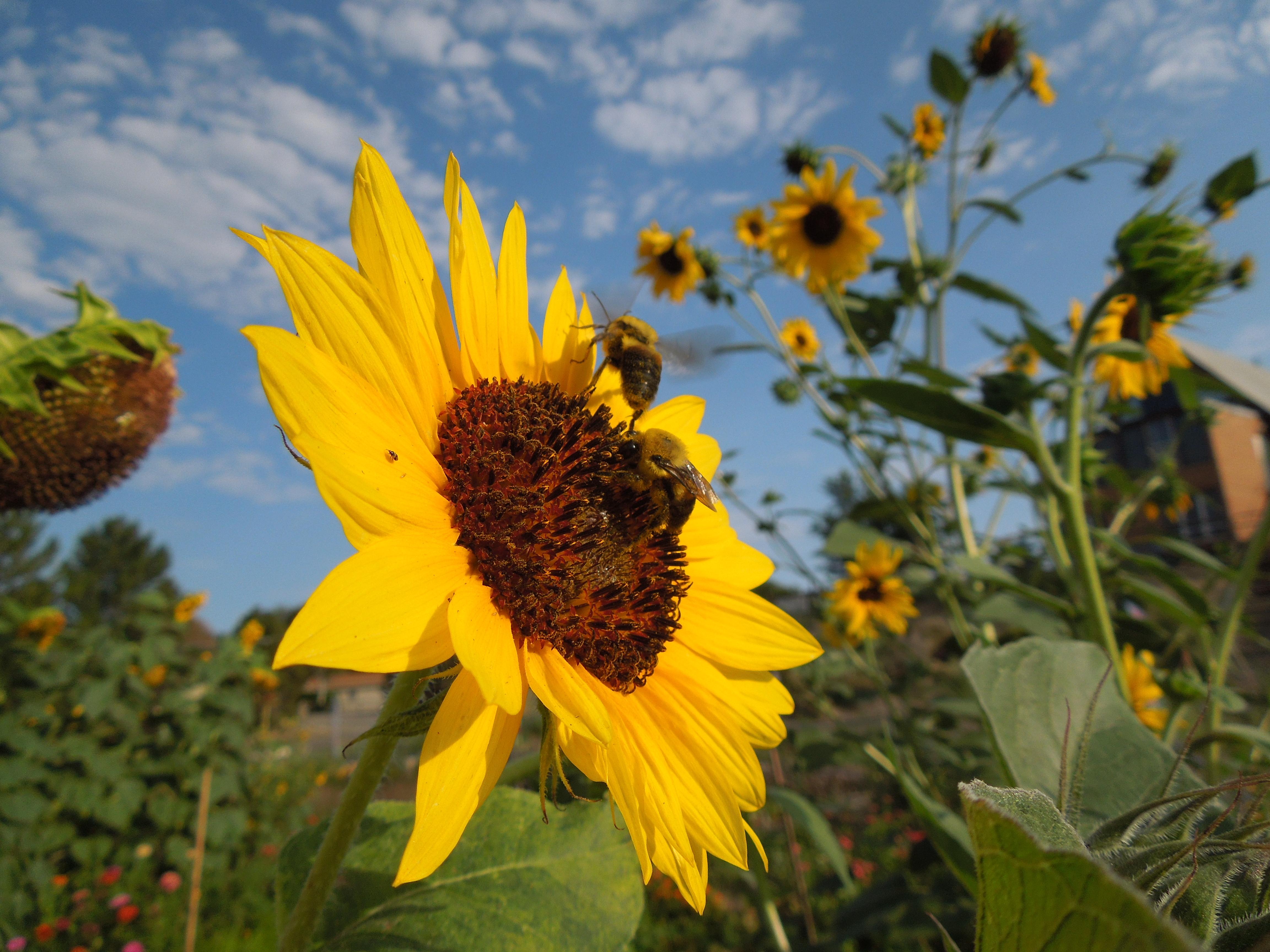 garden-8-2013-20 Community Garden