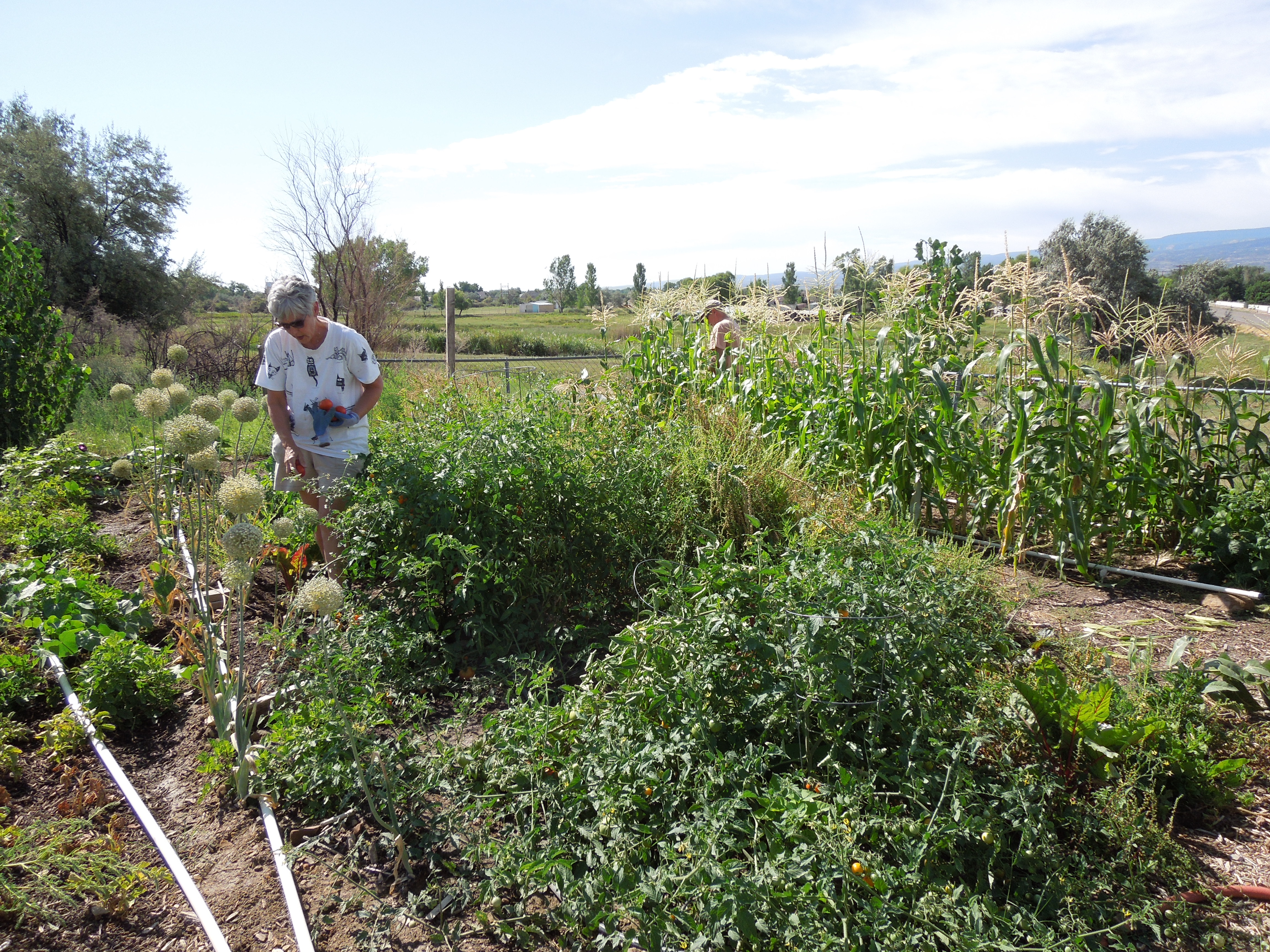 garden-8-2013-5 Community Garden