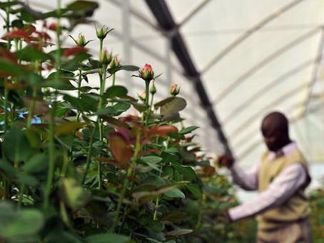 Kenya, Netherlands seek cooperation in agriculture