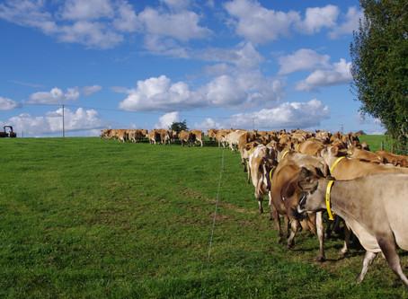 Why I Chose Organic Farming