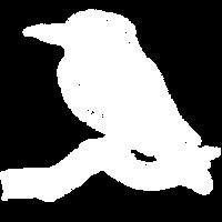square_bird_medium.png
