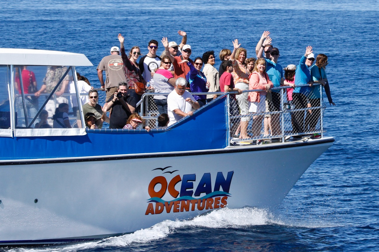 Whale & Dolphin Watching