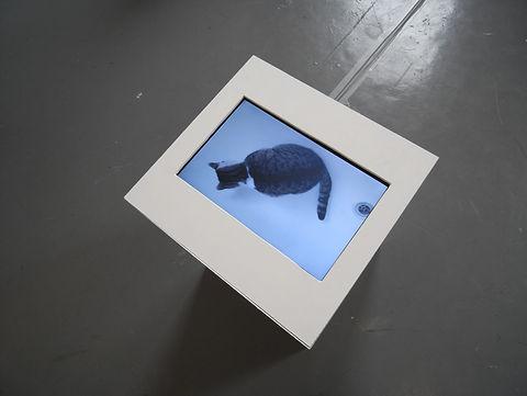 arthouse cat.jpg