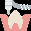 molar (1).png
