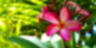 IMG_0466_edited_edited_edited.jpg