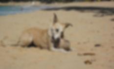 DR Beach Dog.jpg