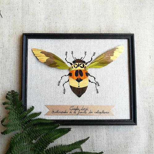 Tableau insecte carabe doré