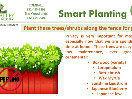 Smart Planting Tip #2- privacy