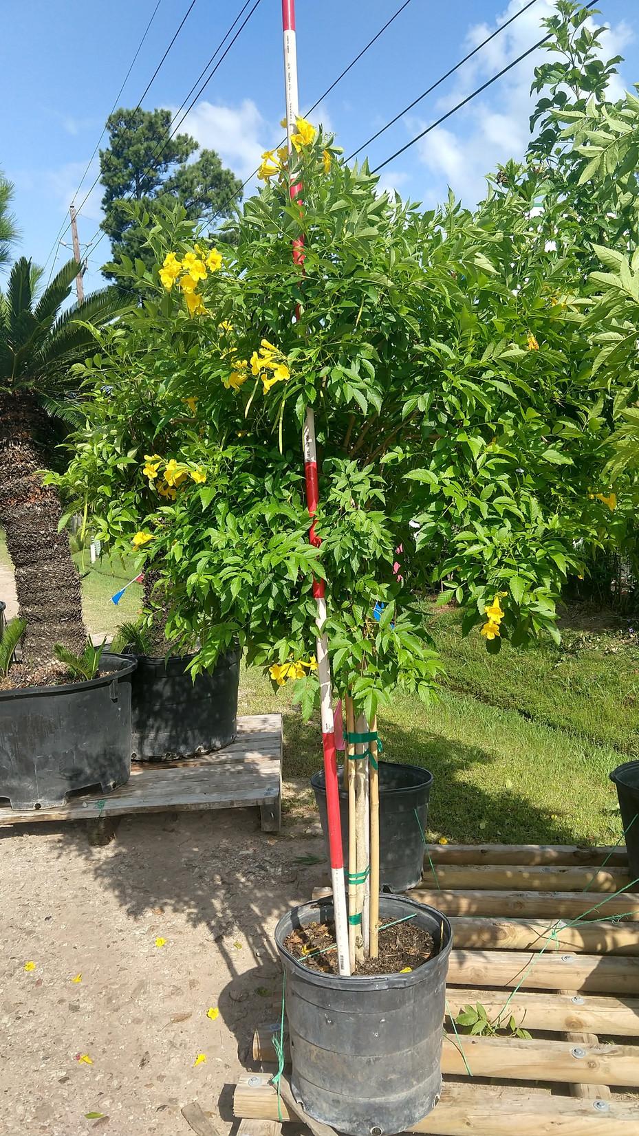 Wholesale Plant Nursery   Texas   Tree Valley Nursery