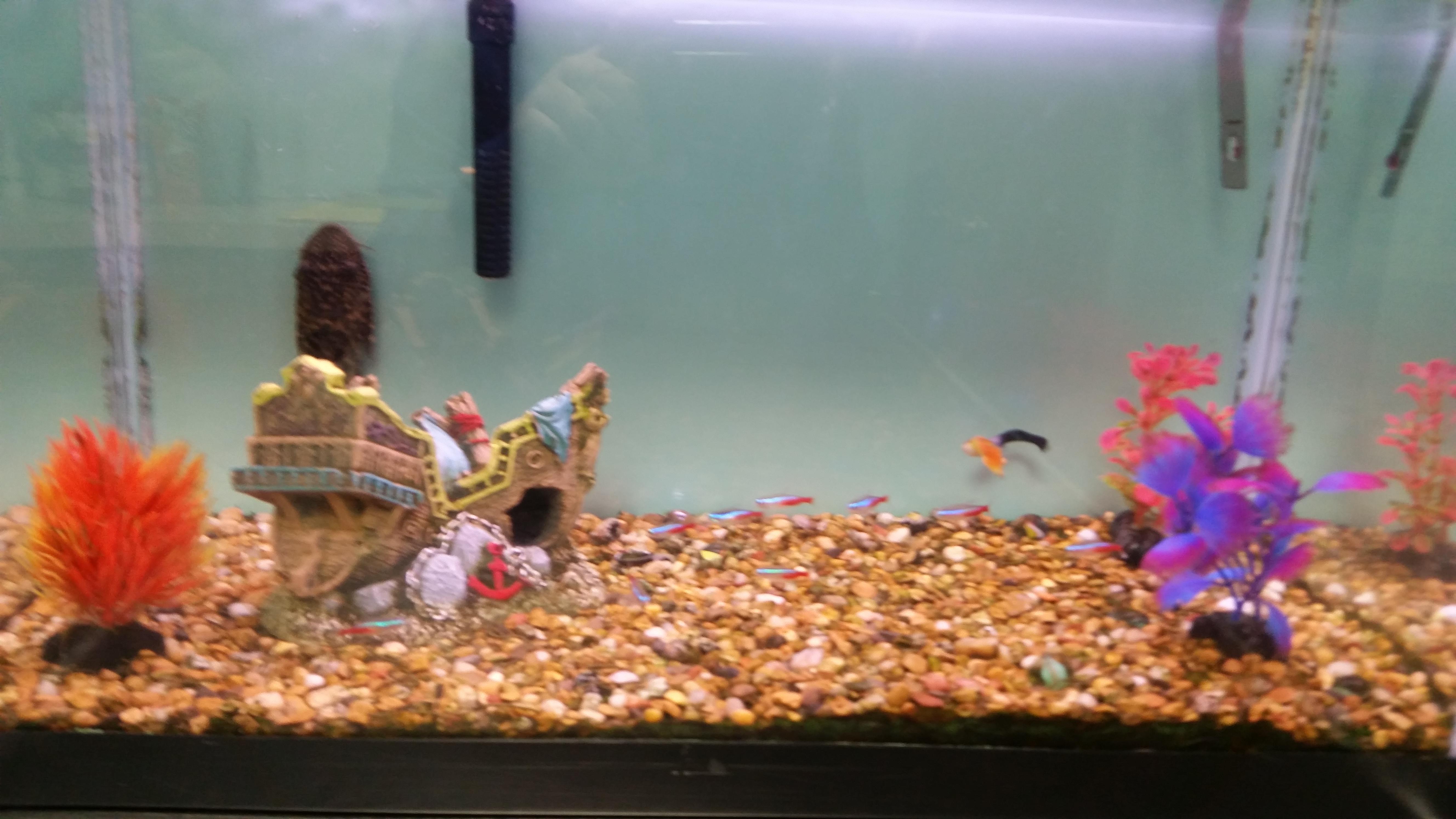 Fish Tank in Exam Room 4