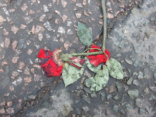 On Fractured Roses