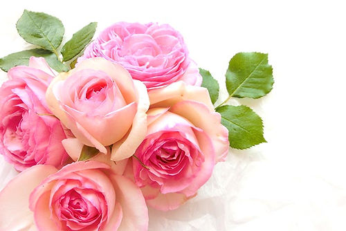 04_rose_.jpg