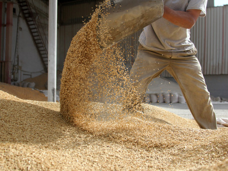 Hydrating Grain Before Milling with Grain Mills
