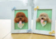 Needle Felting Workshop for Dog Portrait | Fun Starters | Singapore | Needle Felting Class | Arts and Craft | Trial Class