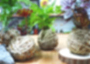 Kokedama Workshop | J2 Terrarium | Plant design class | Pot Design | Hanging Plant Design Class | Kokedama Class | Japanese Plant Pot Design Class | Singapore