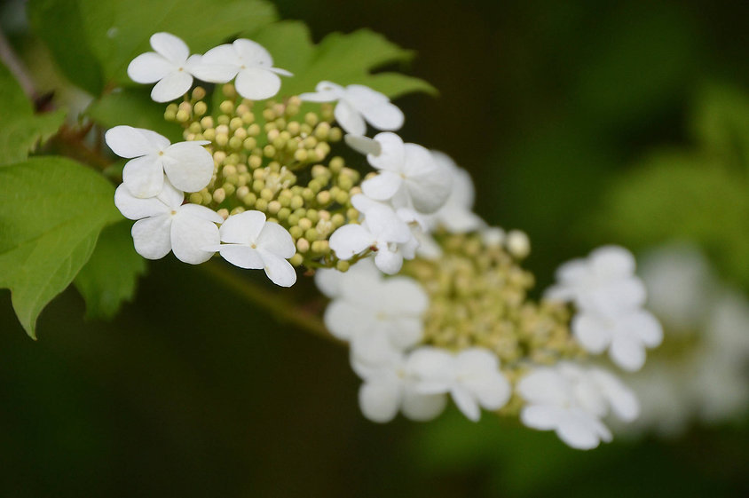 white flowers in landscaping