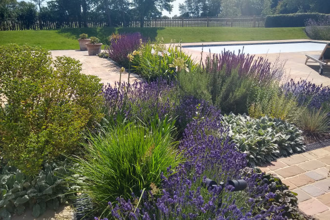 A planting project : :