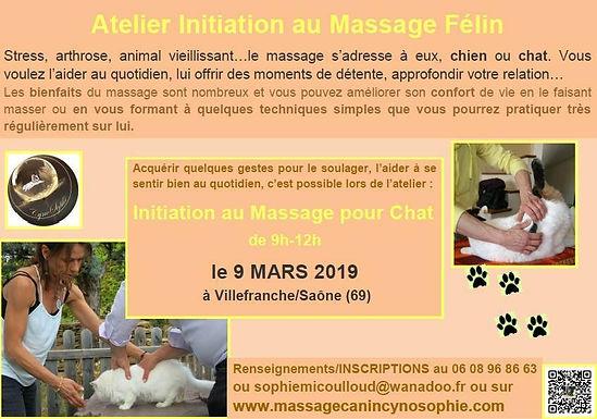 atelier_massage_félin_mars_2019.jpg
