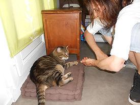 initiation massage chat cynosophie 1.jpg