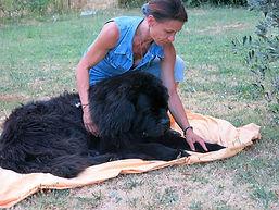 massage canin cynosophie f1.jpg