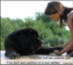 massage canin cynosophie citation.jpg
