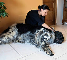 massage canin s.micoulloud