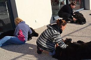 massage_canin_cynosophie_initiation_sémi