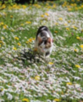 massage canin cynosophie fleurs de bach0