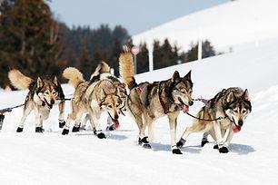 husky-race-in-alpine-mountain-in-winter.