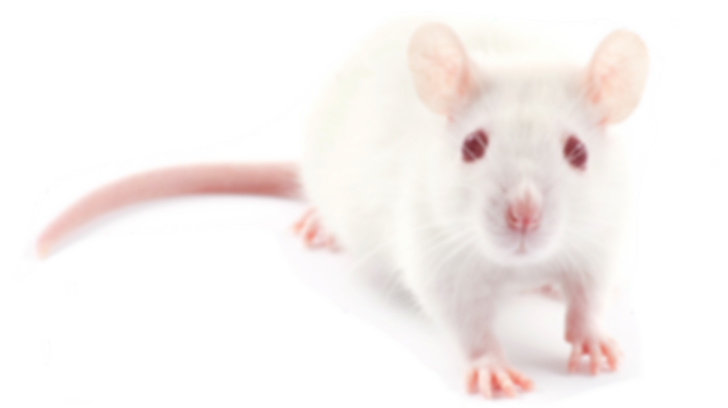 whitemouse.png