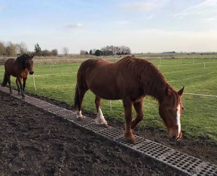 mud control grid_horses walking single f