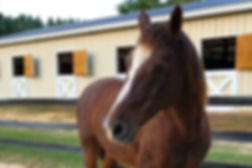 Bright Side Youth Ranch_horse in front o