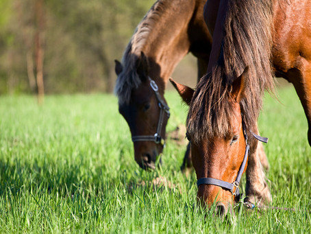 Soil Health for Horse Pastures: Part 4 - Sulfur