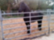 Horse standing on paddock slabs