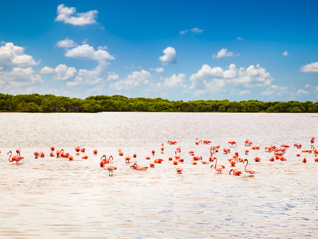 Flamingo Watching in Mexico