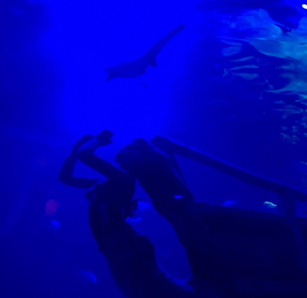 Mexico City aquarium