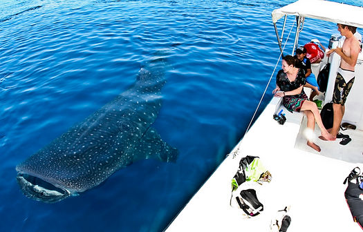 Whale Shark Tour.jpg