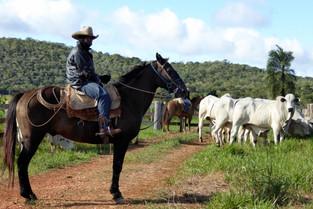 Bonito cowboy