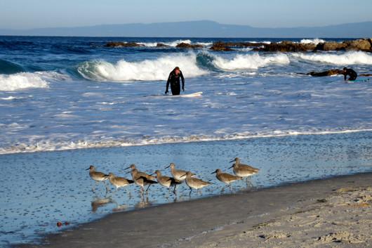 Surfers at Asilomar State Beach