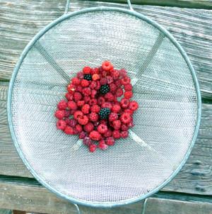 Freshly picked raspberries and blackberries