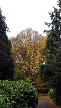 Fall color in Assistens Cemetery, Copenhagen