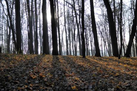 Tsaritsinyo Park