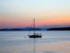 Shagbird at dusk