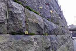 Wall, Helsinki