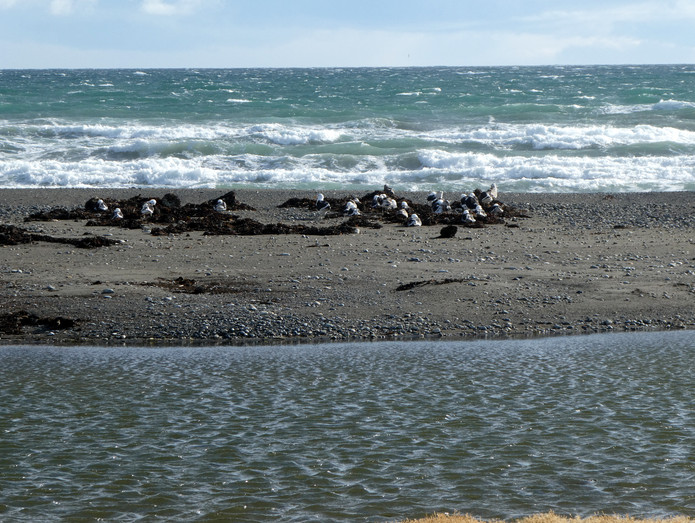 Seabirds on Straits of Magellan
