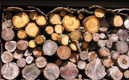 Next years fireplace wood