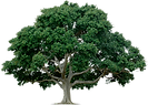 tree_PNG212.png